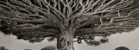 ancient-trees-01[1]