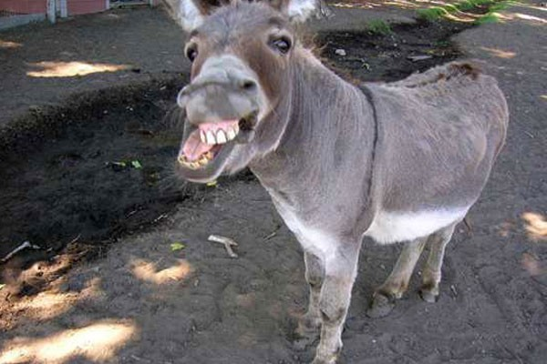 This lovely donkey