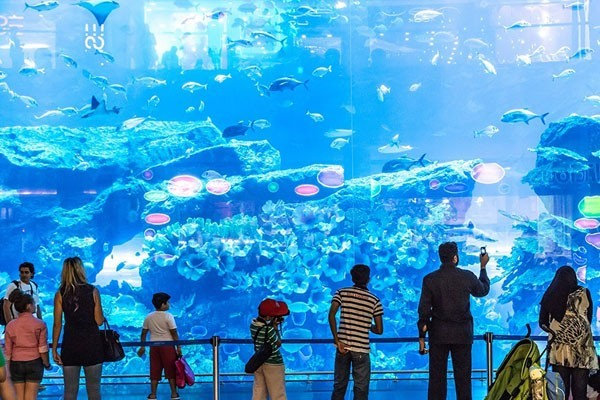 Huge Fish tanks