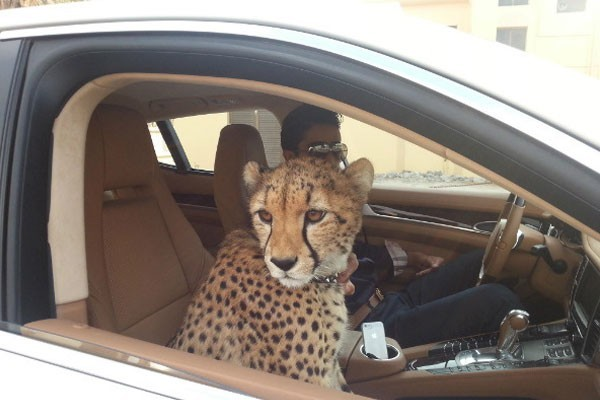 Pets of people in Dubai