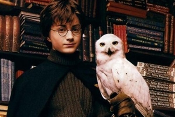 Headwig from 'Harry Potter'