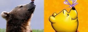 real-life-animals-destacado