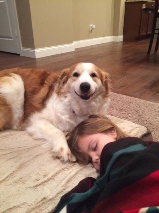 2. Dog napping with his human