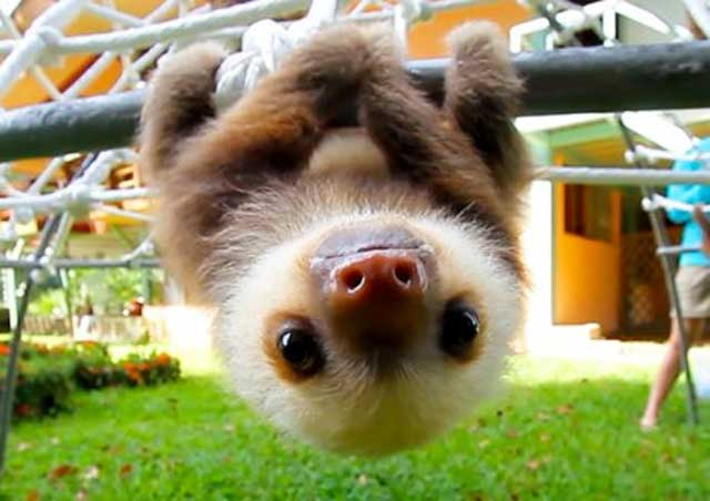 11. Hold on, baby sloths are here and they win everything