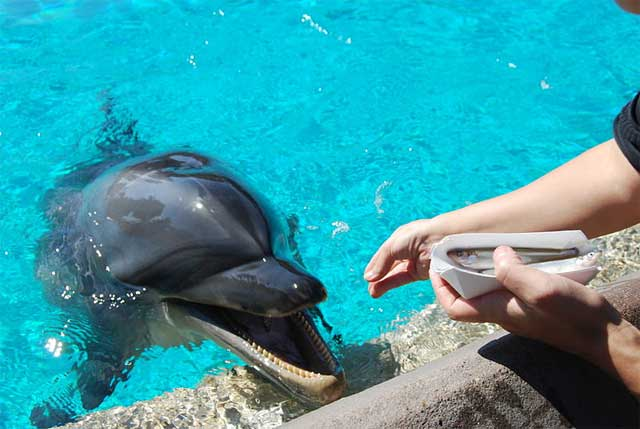 4. Captive dolphins have physical health problems