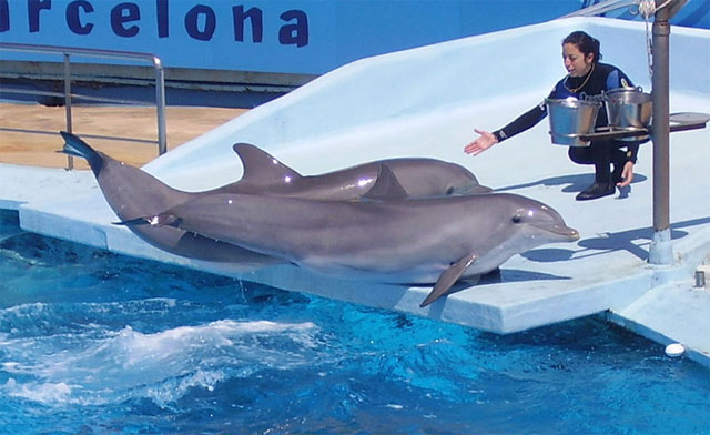 6. Captive-bred dolphins are losing their instincts
