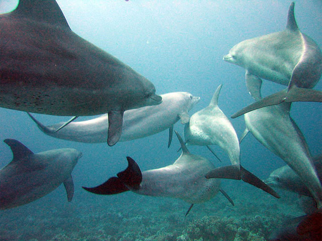 7. Scientists learn more from studying wild populations than captive animals