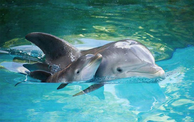 10. Captive dolphin populations aren't useful from a conservation standpoint