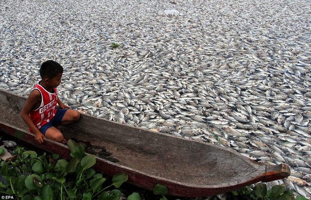 10. Millions of Fish are Dying