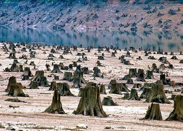 Total deforestation