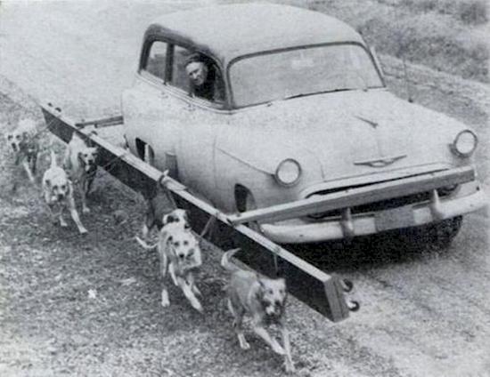 16. Dog walker