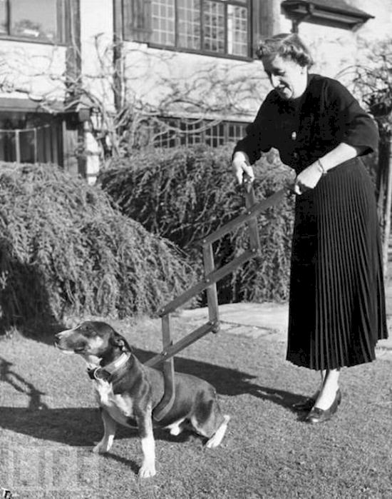 14. Dog Control