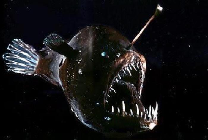 19. Angler Fish