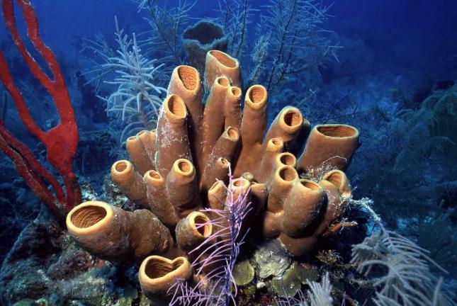 10. Sea Sponges