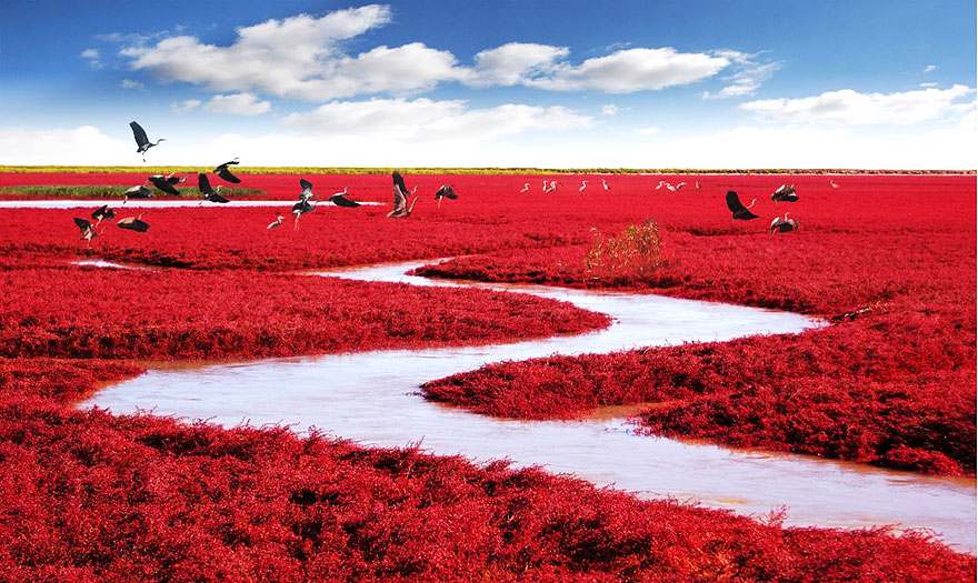 16. Red Beach, Panjin, China