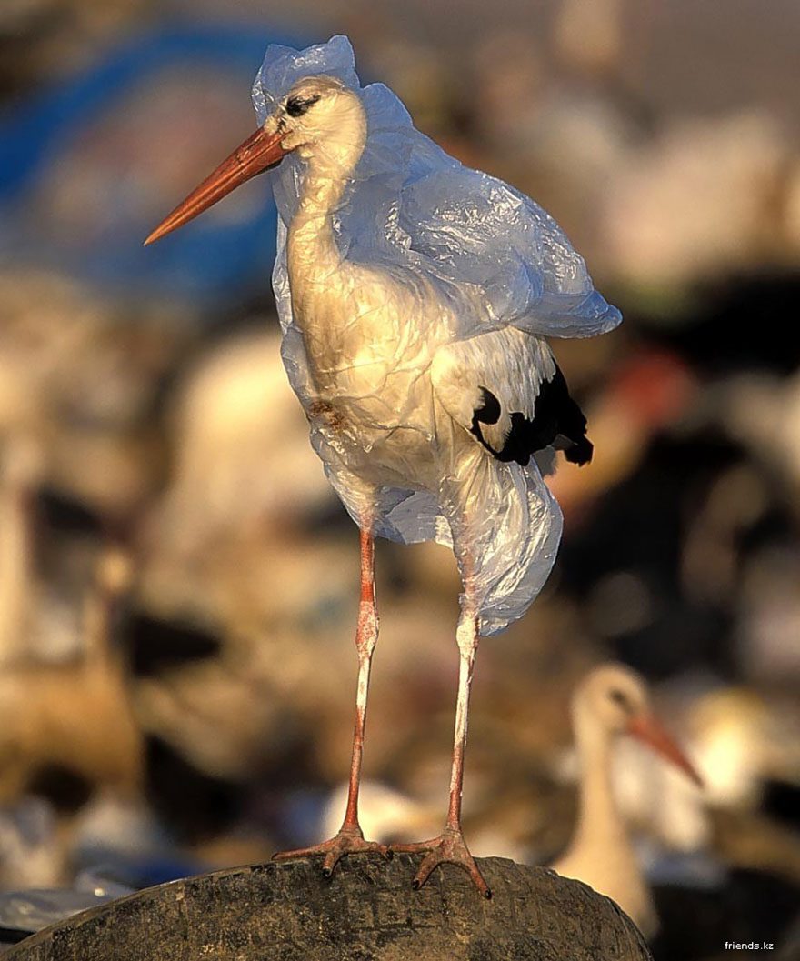6. Stork Trapped In Plastic