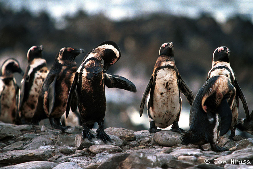 8. Penguins