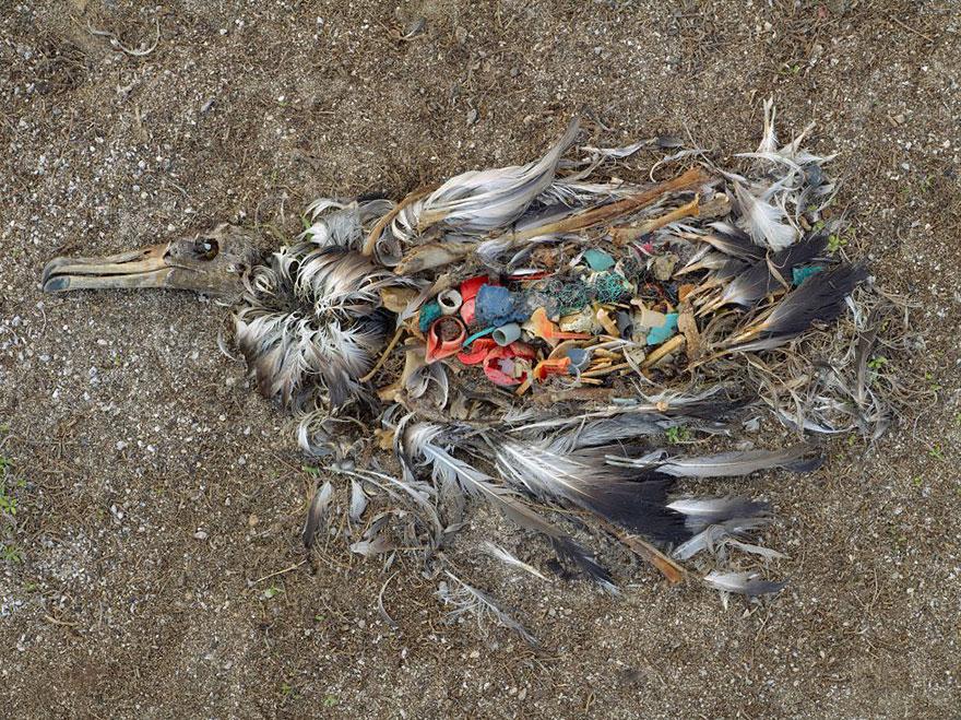 5. Albatross or dark art