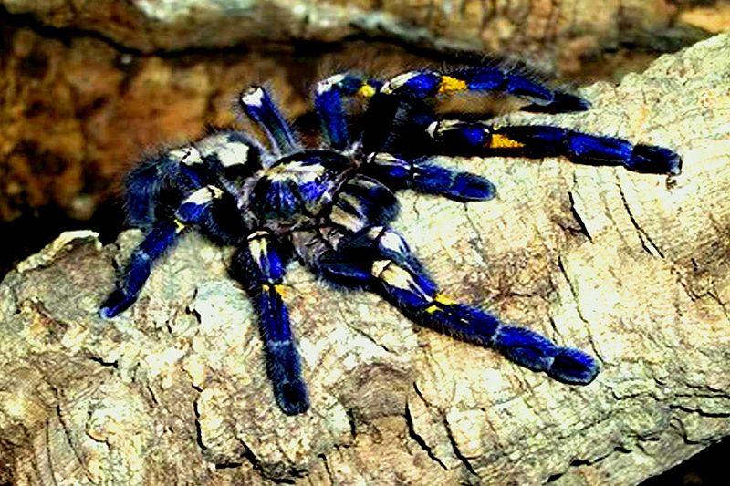 15. Spider Gooty