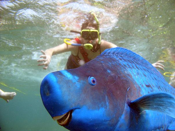10. Blue Parrotfish