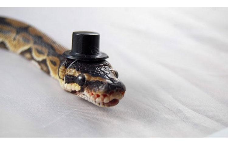 A total gentleman