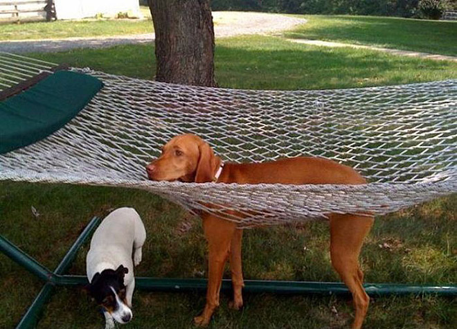 Don't get on that hammock