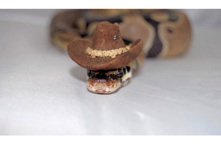 The cowboy snake