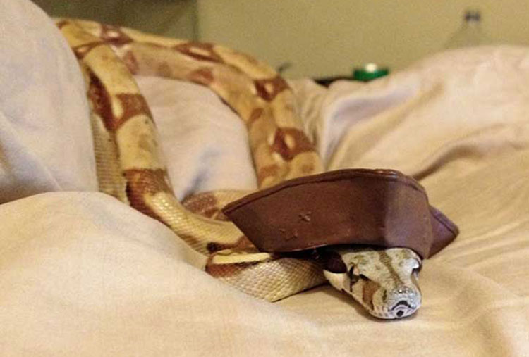 A pirate snake