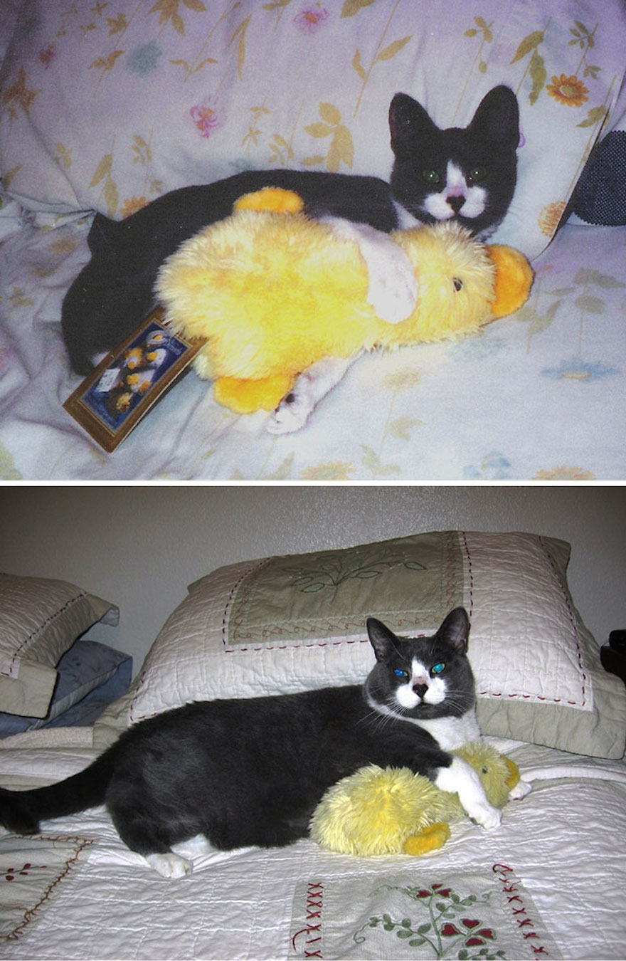 This cat hasn't changed much