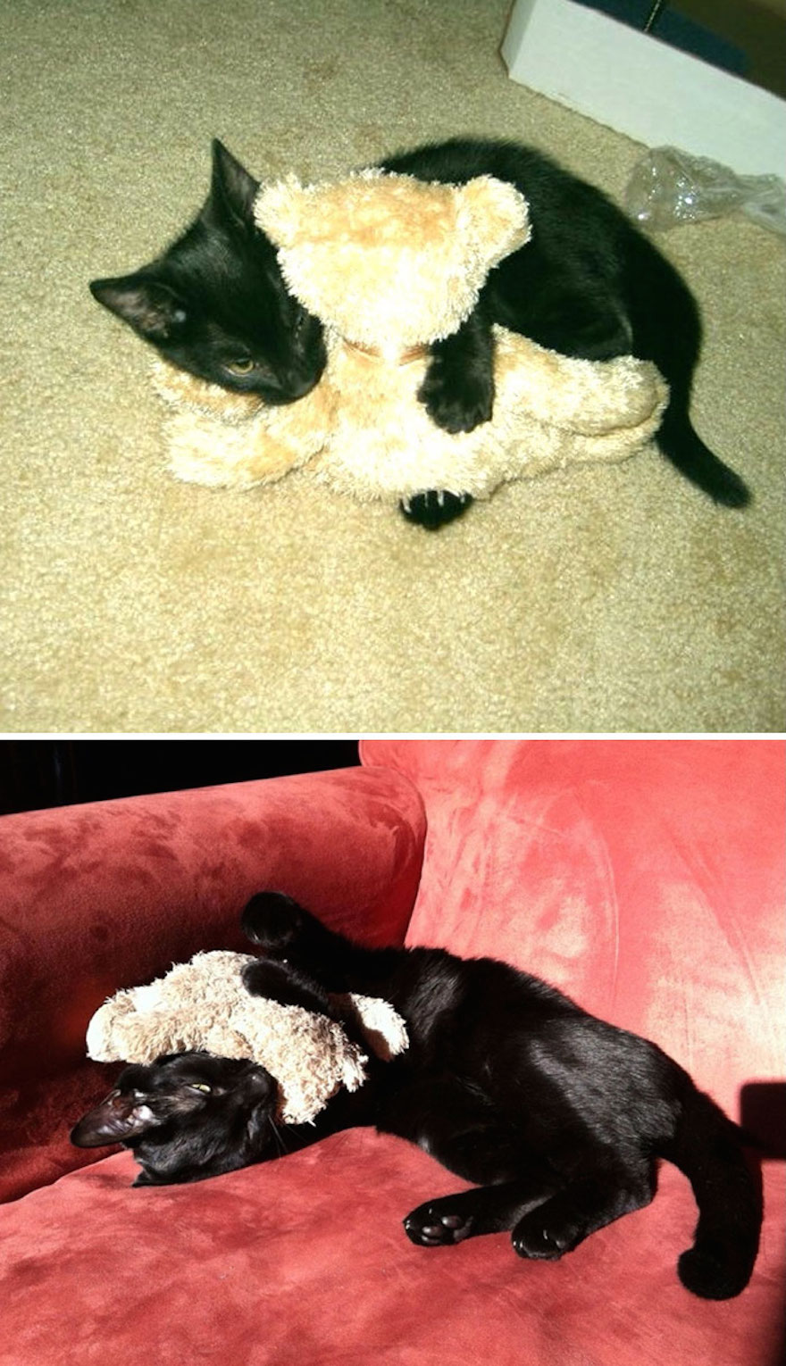 He's addicted to his teddy bear