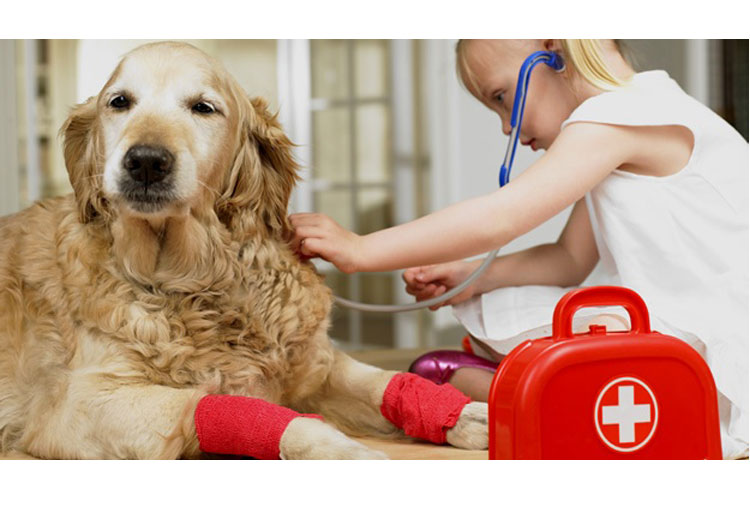 Pets can help children understand life cycle