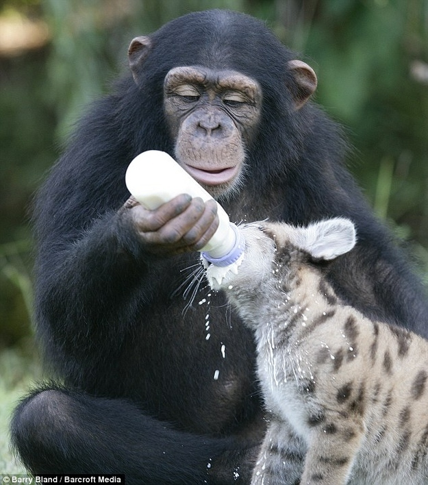 A monkey feeding a hyena