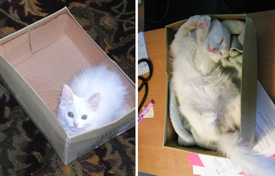 That looks like the coziest box ever