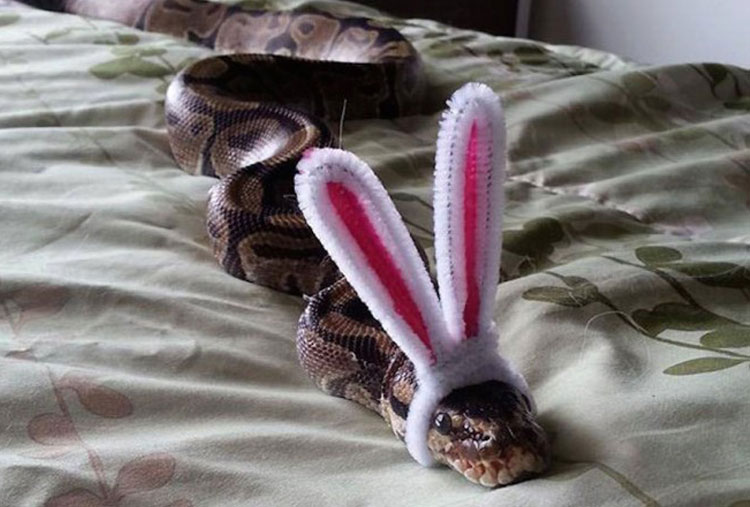 Snake with ears
