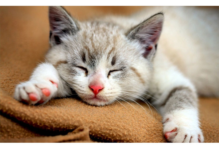 Cats sleep two-thirds of the day