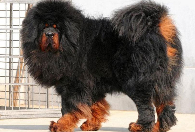 The most expensive dog breed