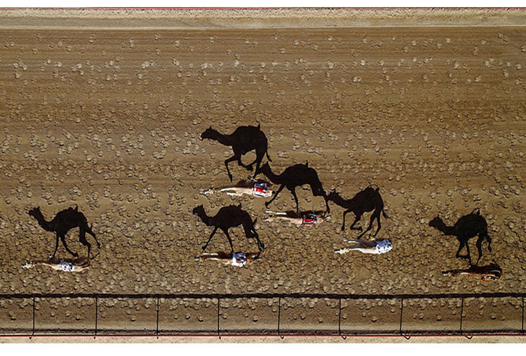 Al Marmoun Camel Racetrack, Dubai, United Arab Emirates