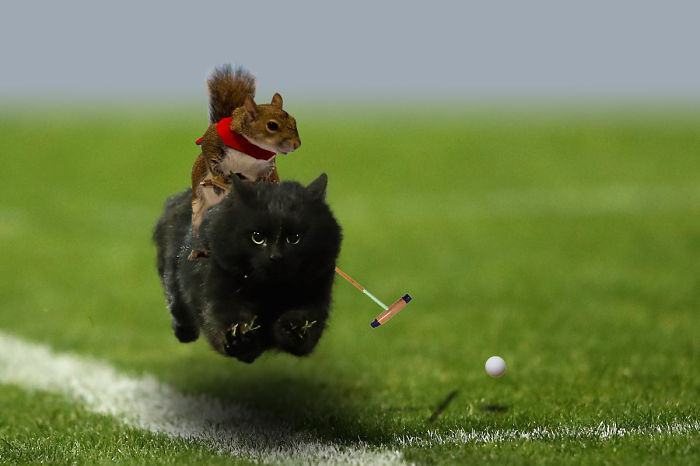 Polo cat