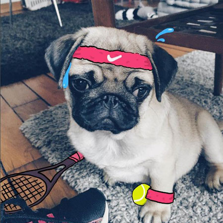 82f8919d0c6b This is the cutest pug I ve ever seen! Check out the doodles on ...