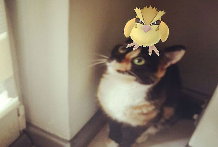 Here's Pidgey again…