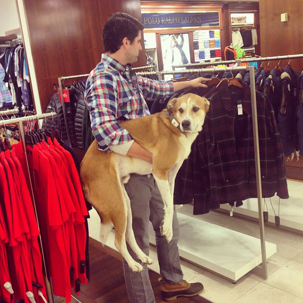 Shopping with the dog