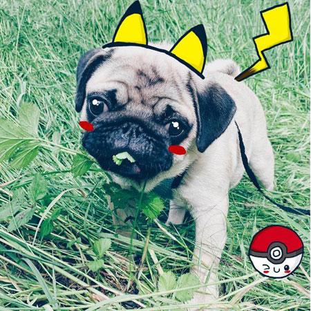 New Pokémon creature