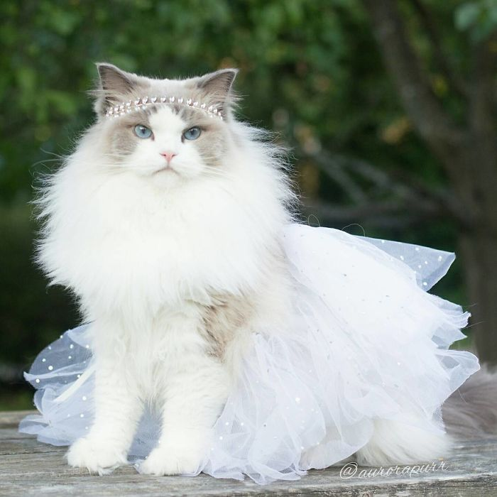A real kitty princess