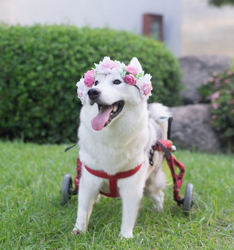 What a lovely flower crown