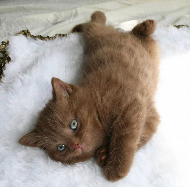 Green-eyed cutie