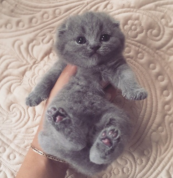 It looks like a stuffed animal