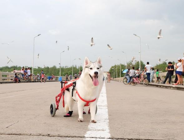 Thanks to her wheelchair, she can go wherever she wants
