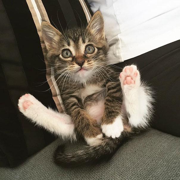 Yoga kitty