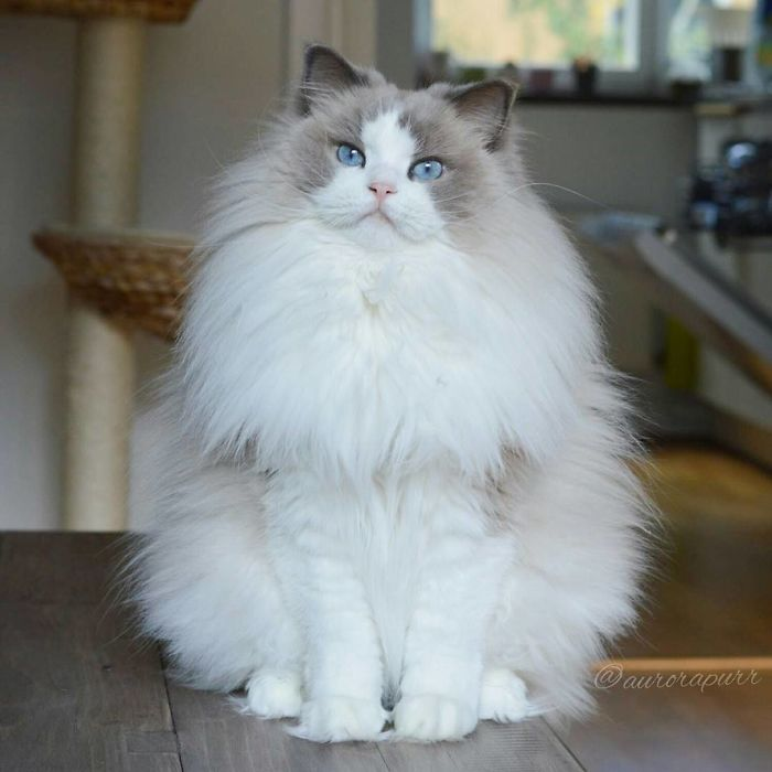She is so fluffy!