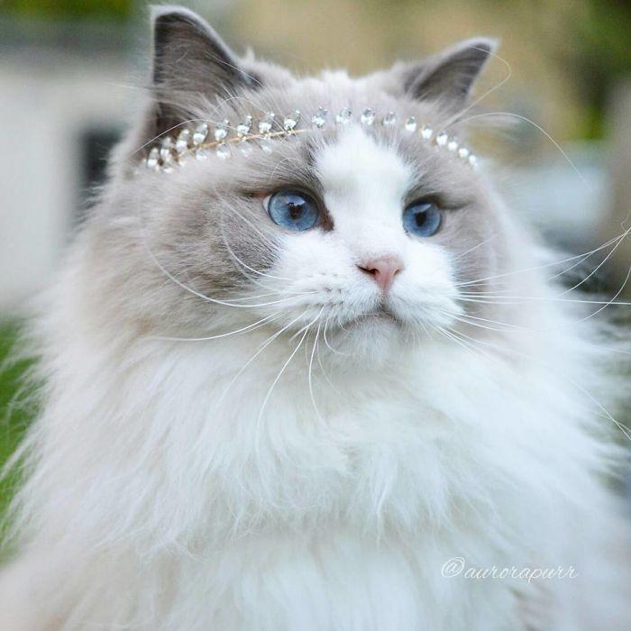Every princess has beautiful jewelry
